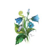 bellflower-1