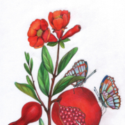 pomegranate-with-two-butterflies-2