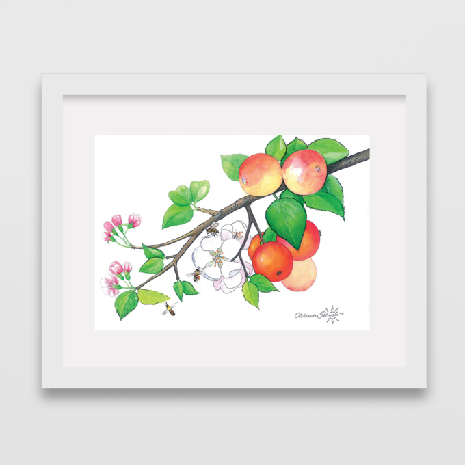 apple-tree-3