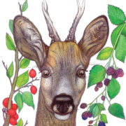 deer-and-berries-2