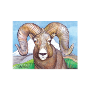 Rocky-Mountain-Sheep-2