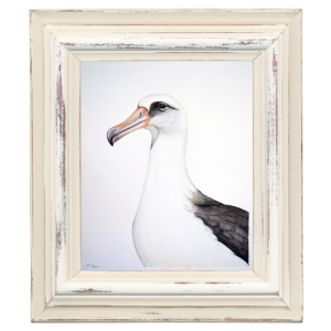 Albatross-6