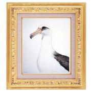 Albatross-7