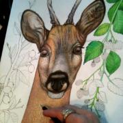 Deer-and-berries-11