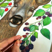 Deer-and-berries-12