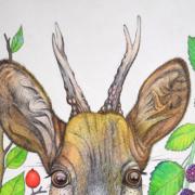 Deer-and-berries-2