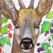 Deer-and-berries-3