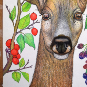 Deer-and-berries-5