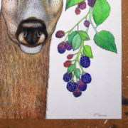 Deer-and-berries-6
