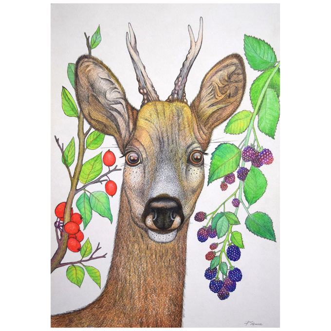 Deer-and-berries