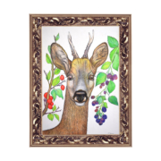 Deer-and-berries-8