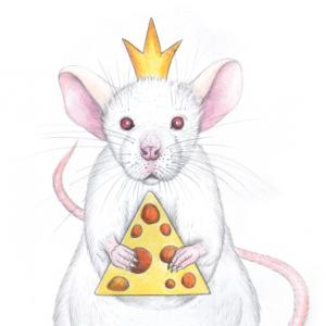 White-rat-4