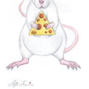 White-rat-5