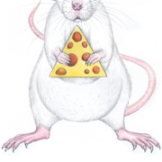 White-rat-6