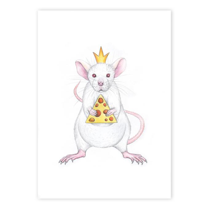 White-rat-1