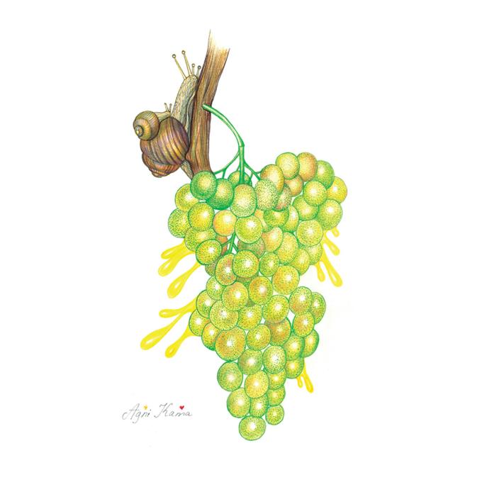The-magic-of-grape-flavor-2
